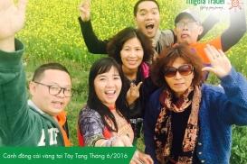 Canh-dong-cai-vang-tai-Tay-Tang-T6.2016