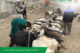 Kailash-Tay-Tang-Migolatravel (6)