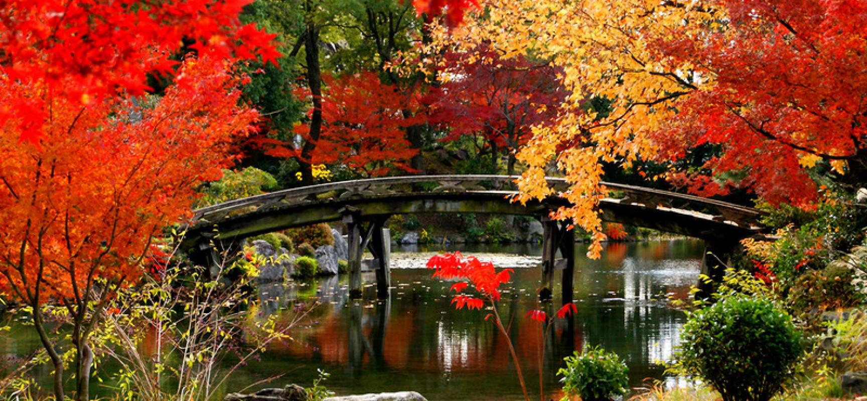Cảnh tượng đẹp đến nao lòng, Du lịch mùa thu để xem lá đổi màu là nguồn lợi chính của du lịch Nhật Bản