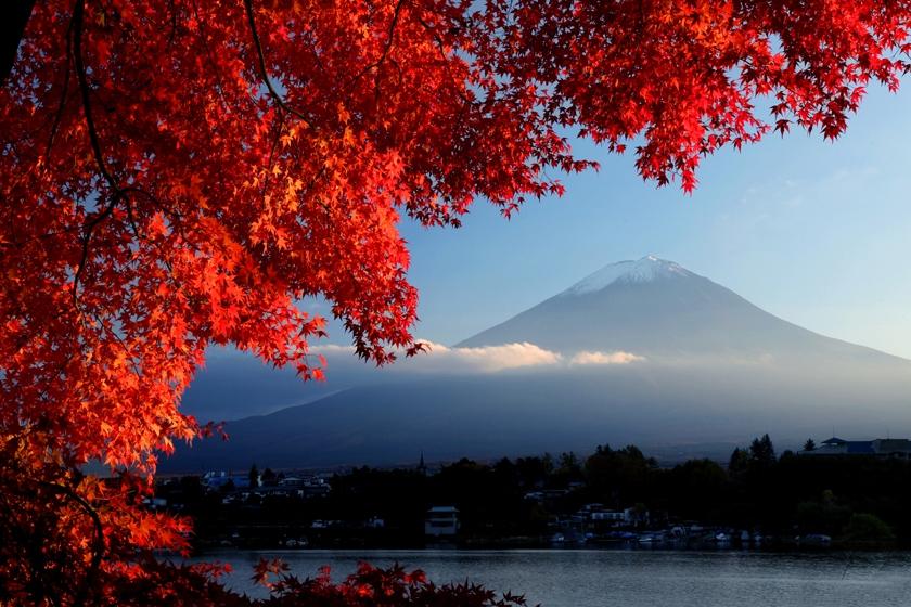 Nhiều du khách tranh thủ đến Nhật Bản vào dịp này để ngắm mùa lá phong đỏ