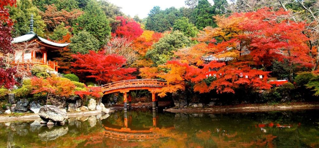 Mùa momiji bắt đầu từ giữa tháng 10 đến hết tháng 11