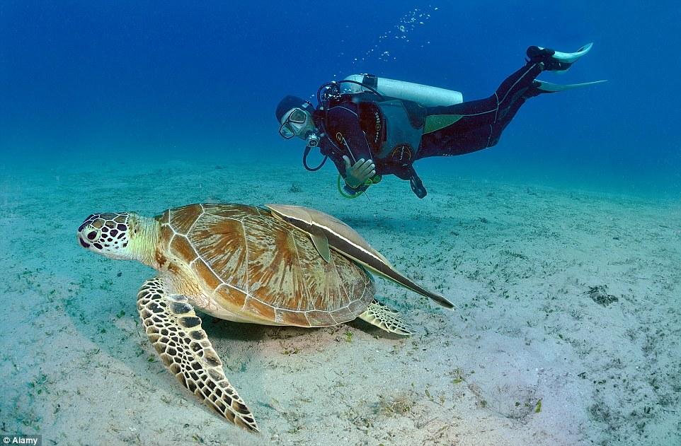 Tham gia lặn biển để chiêm ngưỡng đời sống sinh vật phong phú của Philippines