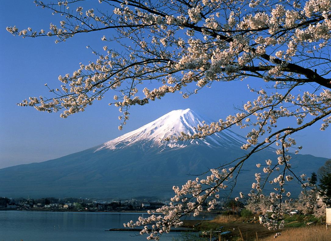 Núi Phú Sĩ và hoa anh đào, biểu tượng của đất nước Nhật Bản
