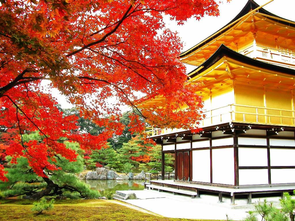 Người Nhật rất thích được tìm về với thiên nhiên mỗi khi có thời gian rảnh