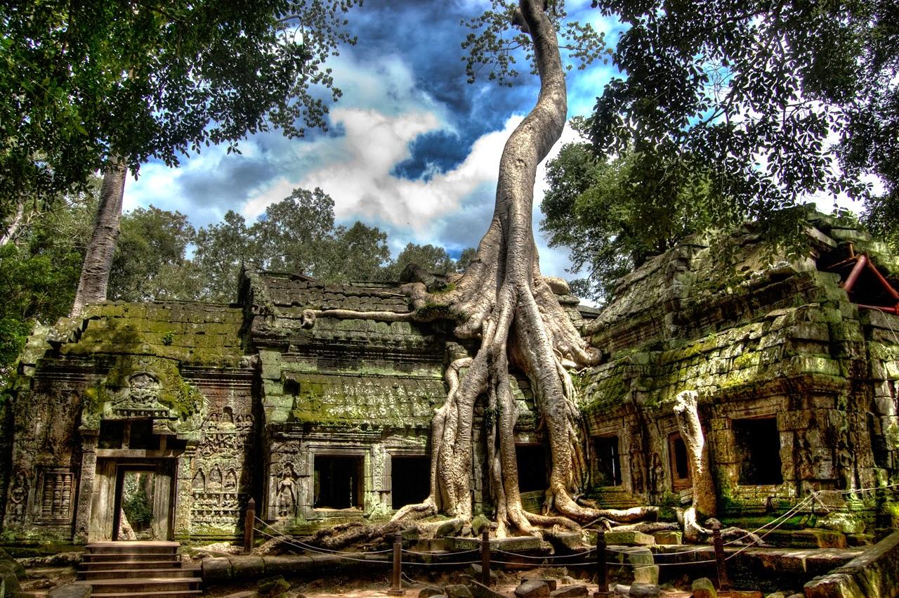 """Những cây """"Spung"""" với bộ rễ lớn ăn sâu vào giữa các phiến đá gây ấn tượng đậm nét với du khách về vẻ cổ kính, trầm mặc"""
