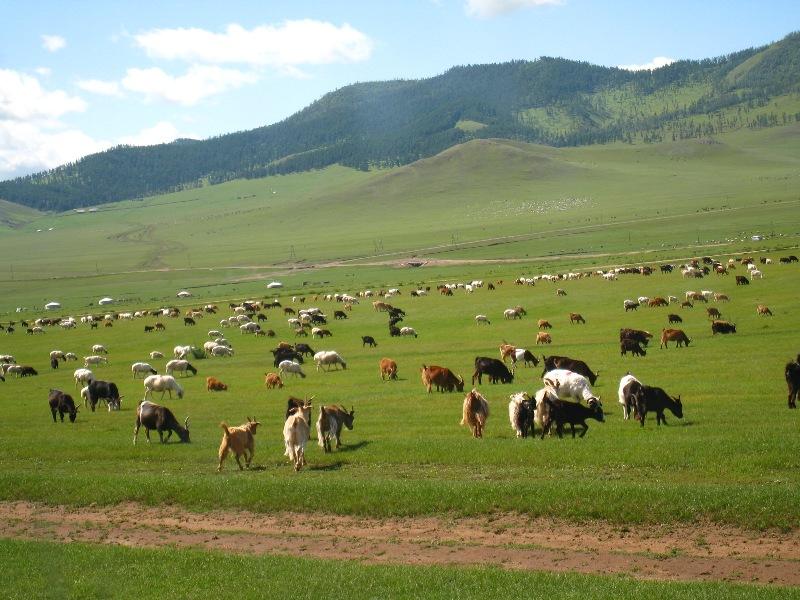 Vùng đất thuộc quốc gia Mông Cổ xưa kia bị cai trị bởi nhiều đế chế du mục như Hung Nô, Tiên Ti, Nhu Nhiên, Đột Quyết... Vào thế kỷ 13, Mông Cổ tiến hành nhiều cuộc chiến tranh chinh phục châu Á và châu Âu. Thời điểm đó, quốc gia này là một cường quốc rộng lớn và hùng mạnh vào bậc nhất thế giới. Vị vua nổi tiếng, có ảnh hưởng nhất của Mông Cổ chính là Thành Cát Tư Hãn.