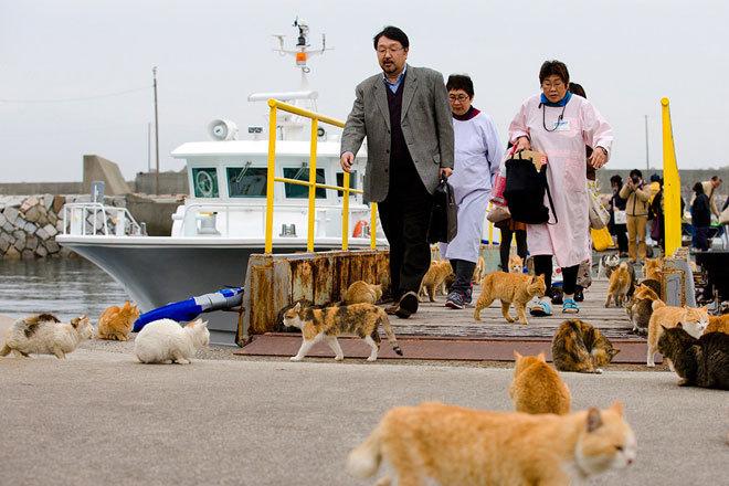 Những chú mèo có mặt ở khắp mọi nơi trên đảo.