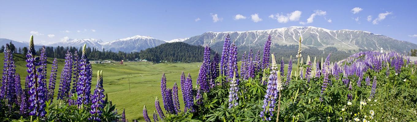 Thung lũng Kashmir nằm ở phía Tây Bắc của khu vực tiểu lục địa Ấn Độ. Giữa thế kỷ 12, nơi đây được biết đến như một hồ nước. Đây cũng là nơi thường xuyên diễn ra các cuộc xung đột chính trị, động đất,… Cho đến những năm sau đó, khi tình hình dần ổn định, người Ấn bắt đầu chú ý tới cảnh sắc xinh đẹp của thung lũng. Những ngọn núi tuyết, những dòng sông băng dần hiện hữu làm say lòng người ngắm
