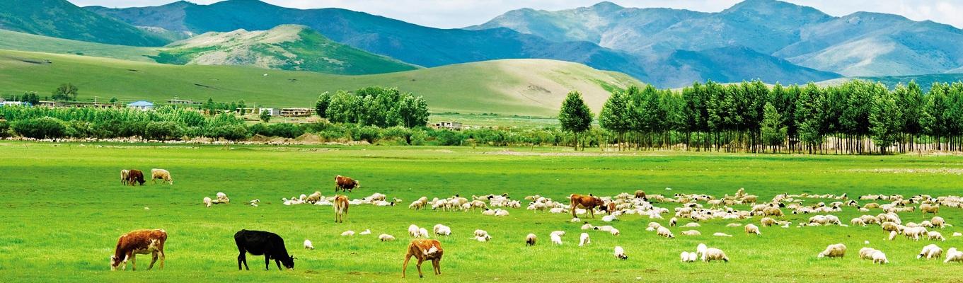 Đặc trưng của hệ sinh thái Mông Cổ chính là đồng bằng lớn với những thảo nguyên rộng bao la và sự ưu thế của những động vật móng guốc ăn cỏ. Thảo nguyên Mông Cổ nổi bật với những đàn thú móng guốc sinh sống, trong đó đáng chú ý là những đàn linh dương quần tụ cùng nhau với số lượng rất lớn