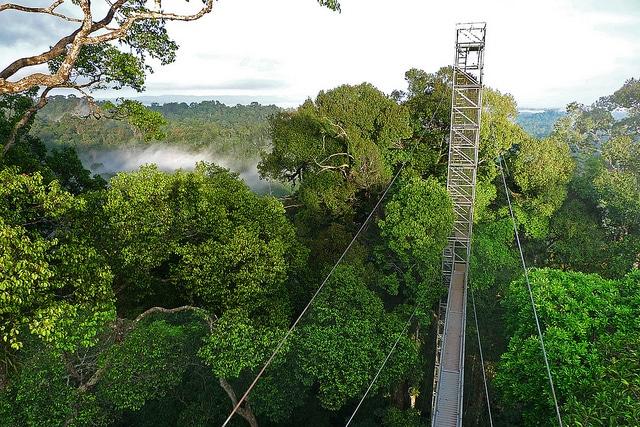 Công viên quốc gia Ulu Tempurong độc đáo với lối đi trên cao