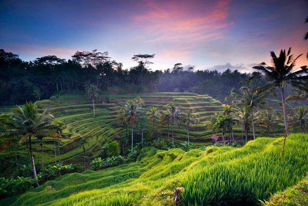 Làng Ubud thanh bình với những cánh đồng ruộng bậc thang xanh ngát