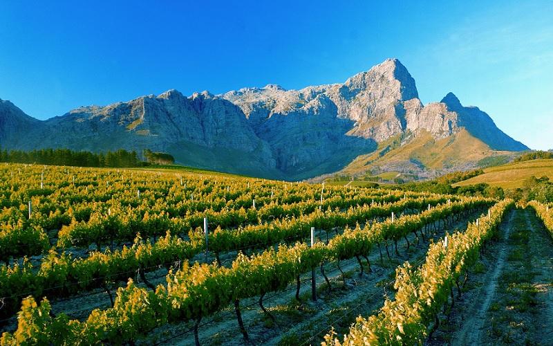 Fairview Wine Estate – một khu vực có tiếng ở Nam Phi với những vườn nho xanh mướt và hương rượu nồng nàn