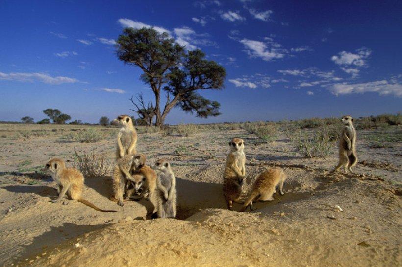 Nhiều loài động vật sinh sống ở Kgalagadi Transfrontier Park bất chấp khí hậu khô cằn