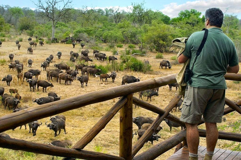 Vườn quốc gia Kruger là nơi tập trung nhiều loài động vật nổi tiếng ở Châu Phi
