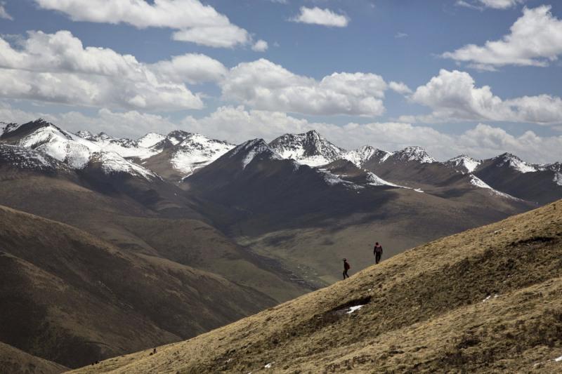 Đông trùng hạ thảo mọc ở những vùng núi cao ở Tây Tạng