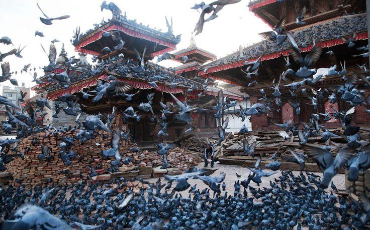 Nepal còn là thiên đường cho những ai yêu thích các loài chim