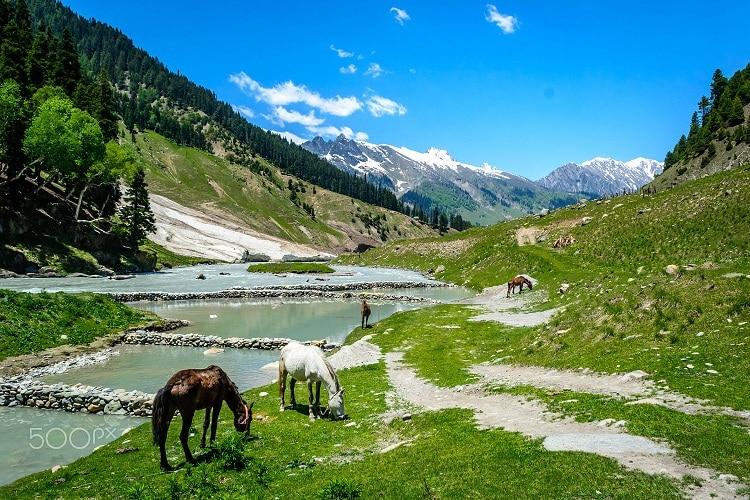 Thung lũng Kashmir còn được biết đến với nhiều tên gọi hoa mỹ khác