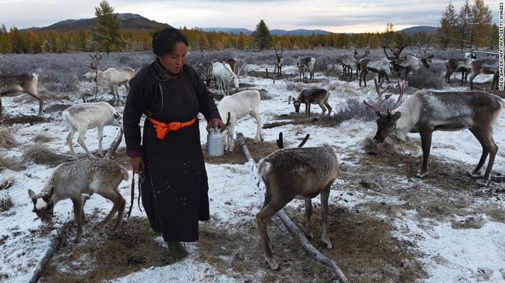 Khác với nhiều nơi ở Mông Cổ, bộ tộc Dukha nuôi tuần lộc thay vì dê, bò, ngựa