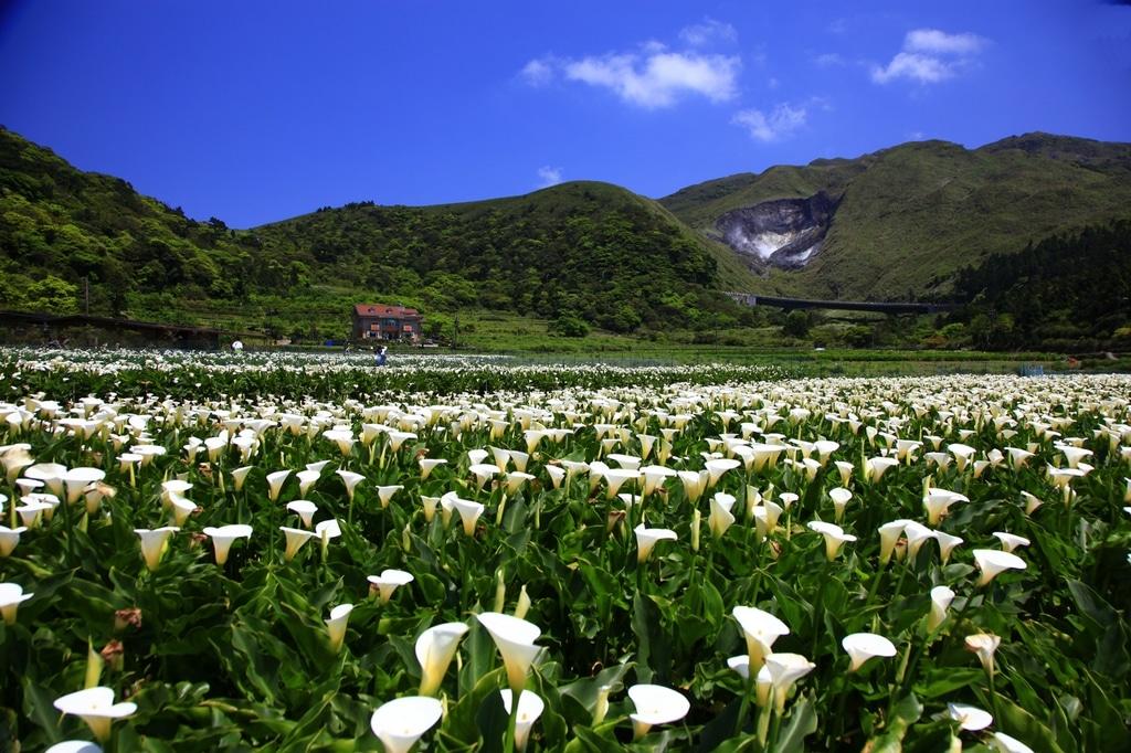 Cảnh Đẹp Dương Minh Sơn Đài Loan