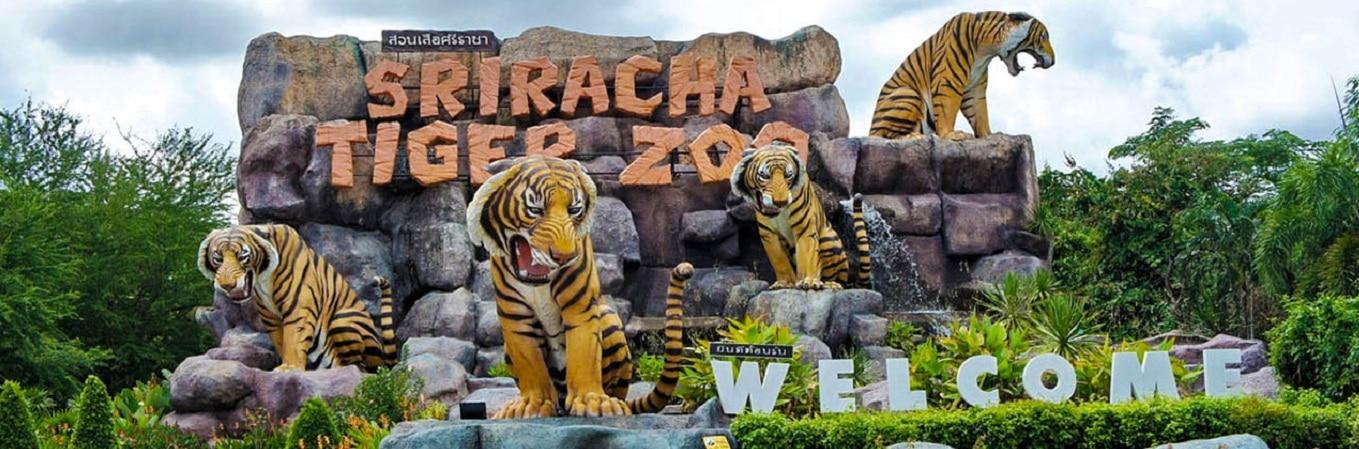 """Sriracha Tiger Zoo, tại đây quý khách có thể chiêm ngưỡng mô hình nuôi hổ và lai tạo độc đáo của người Thái – Mô hình """"heo nuôi hổ - hổ nuôi heo"""". Ngoài ra, quý khách còn được thưởng thức các show diễn cực kỳ hấp dẫn như: show cọp, show cá sấu, show heo"""