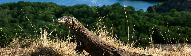 Vườn quốc gia Komodo thuộc quần đảo Nusa Tenggara của Indonesia. Vườn quốc gia gồm 3 hòn đảo lớn là Komodo, Rinca và Pudar cùng vài hòn đảo nhỏ khác