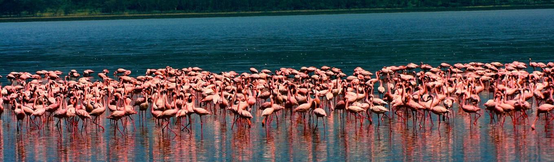Nakuru là hồ nước mặn tự nhiên lớn nhất tại Kenya, nằm ở độ cao 1.754m so với mực nước biển. Hồ Nakuru nổi tiếng tại Kenya cũng như trên thế giới bởi loài chim hồng hạc.