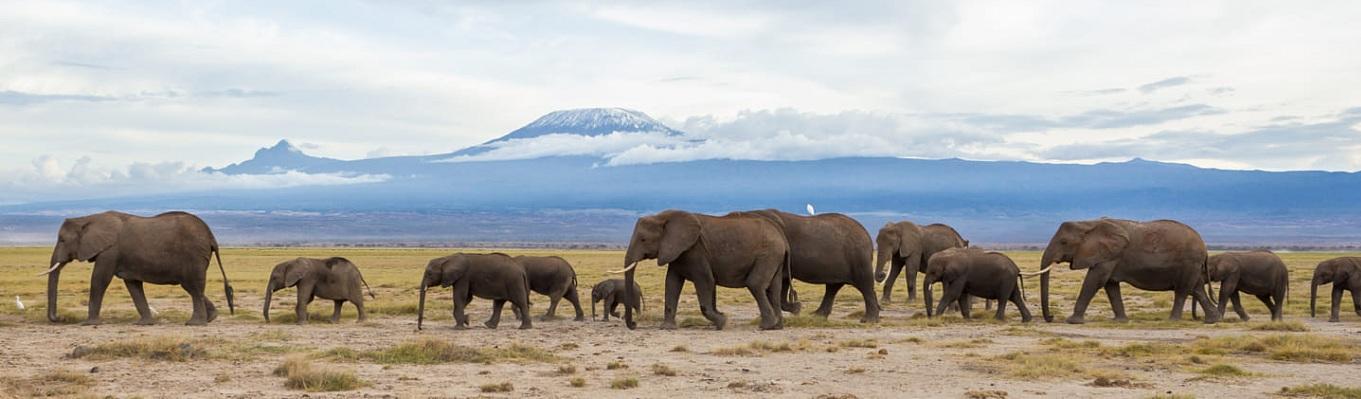 Ngọn núi Kilimanjaro - biểu tượng của Châu Phi, đồng thời là ngọn núi đứng đơn độc cao nhất thế giới