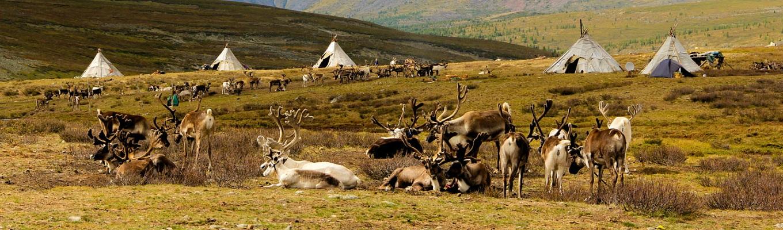 Tsaatan - bộ lạc chăn nuôi tuần lộc di cư cuối cùng ở Mông Cổ