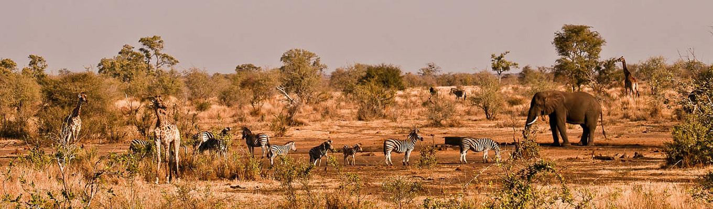 Công viên quốc gia Kruger – Công viên bảo tồn động thực vật lớn nhất Nam Phi với diện tích 18,989 km2. Đây là nơi trú ngụ của hơn 147 loài động vật khác nhau