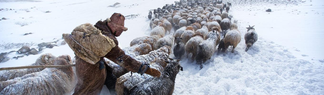 Mỗi năm, từ giữa tháng 2 đến tháng 4, khoảng 200 gia đình bộ tộc Kazakh sẽ bắt đầu chuyến đi dài 90 dặm vượt dãy núi Altai sang phía Tây về Spring camp ở Tavan Bogd National Park nơi có những đồng cỏ xanh tươi và hầu như hiếm có người từ thế giới bên ngoài đặt chân đến vào thời gian này trong năm