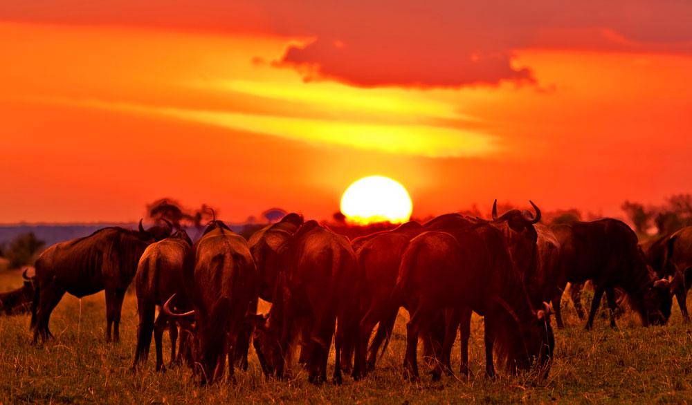 Masai-Mara-Safaris-Kenya