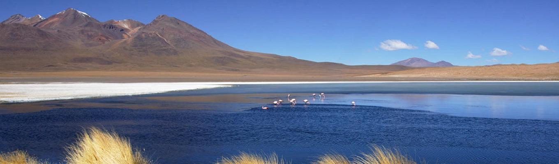 Hồ Hedionda là một trong những hồ nước tự nhiên giữa lòng sa mạc Siloli, nếu may mắn quý du khách sẽ thấy được những bầy vịt, ngỗng trời và hồng hạc vùng Andes...