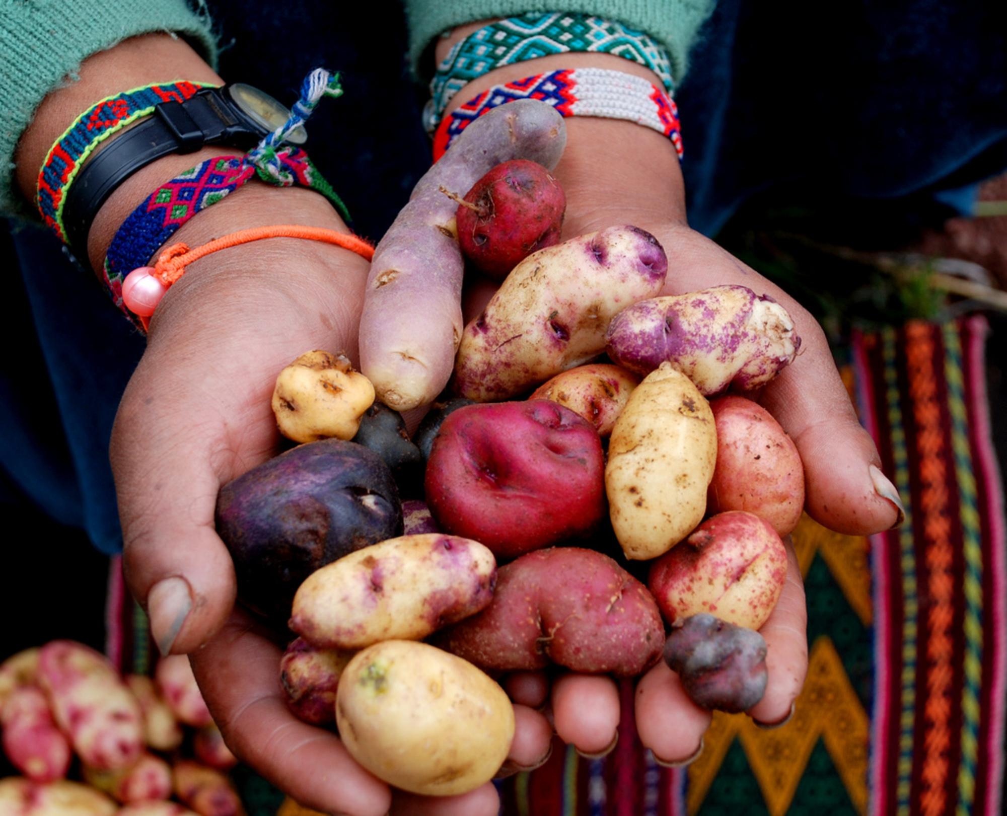potato-peru