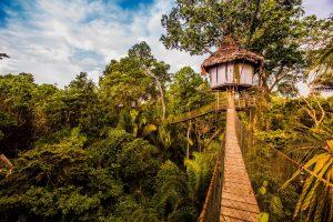 tree-house-peru