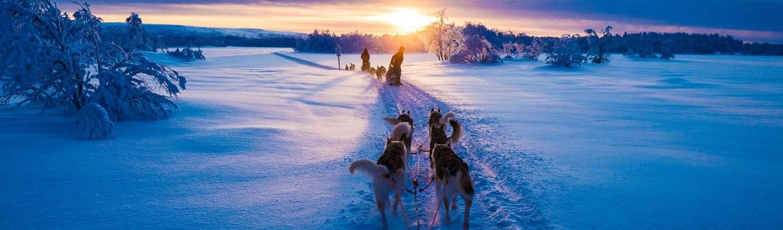 Husky Safari -  khám phá thiên nhiên hoang dã bằng xe trượt tuyết do những chú chó Husky kéo.