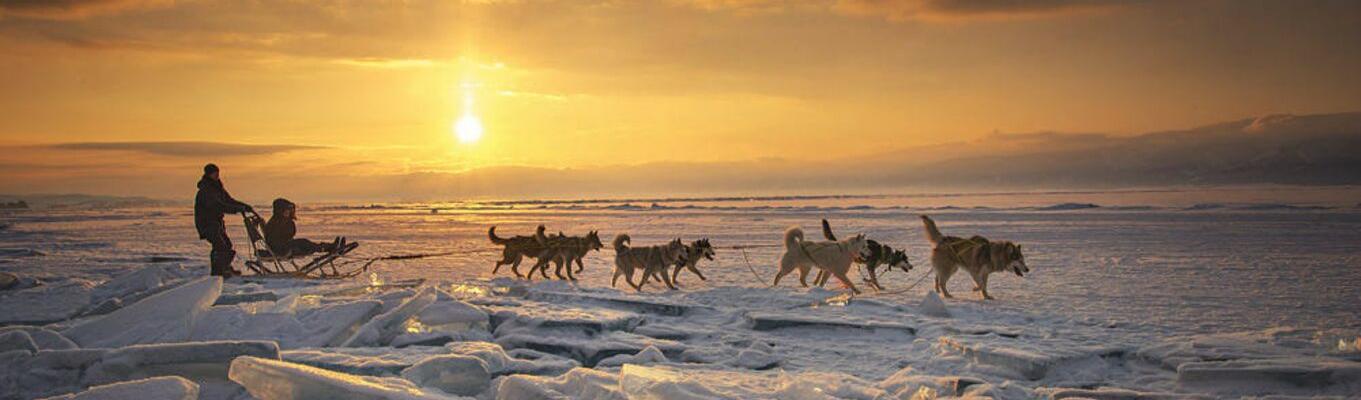 Khám phá vùng viễn đông Siberia trên những chuyến xe kéo bằng chó Husky.