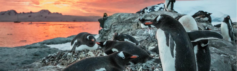 Nam Cực băng giá là một trong những nơi kỳ bí nhất trên Trái Đất. Lục địa này rộng lớn đến nỗi các nhà khoa học mới chỉ bắt đầu khám phá những kho báu ẩn giấu.
