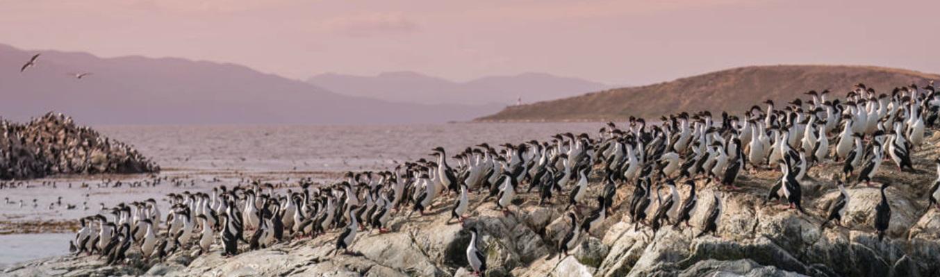 Ở Nam Cực có nhiều loài động vật hoang dã như cá voi, hải cẩu, chim cánh cụt và các loài chim khác. Trong đó, chim cánh cụt là loài động vật phổ biến nhất.