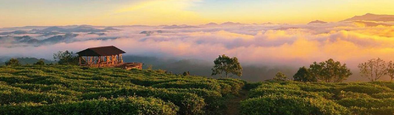 Đồi chè Cầu Đất, một màu xanh của thiên nhiên như được quy tụ tại nơi đây. Là nơi cung cấp chè chính cho thành phố Đà Lạt. Hàng năm nơi đây cho ra trung bình khoảng hơn 1000 tấn trà tươi đưa đi tiêu thụ cả nước.
