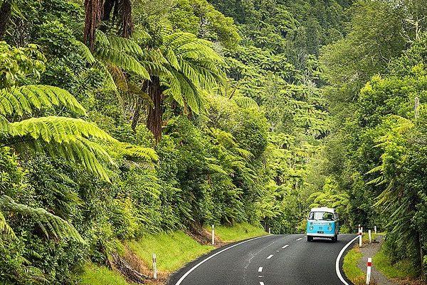 Đảo Bắc New Zealand.