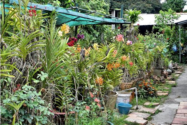 Vườn hoa bên trong nhà cổ Bình Thủy với nhiều loài hoa đầy màu sắc.