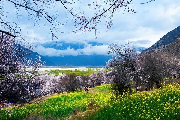 Mùa xuân ở Tây Tạng