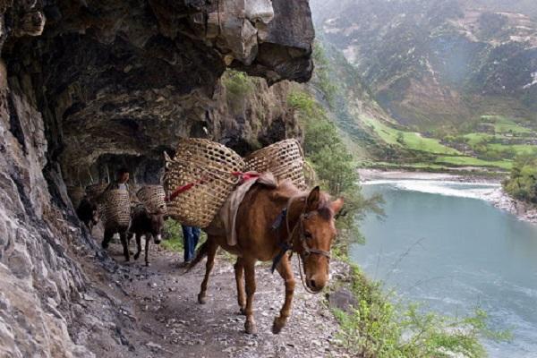 Trà bơ Tây Tạng