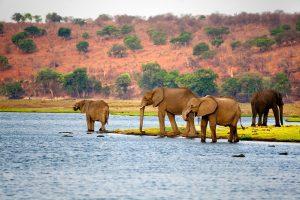 African-elephants-Botswana