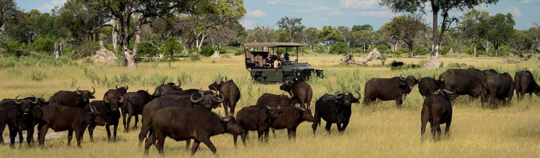 Vườn quốc gia Chobe: khu vườn quy tụ quần thể động vật hoang dã lớn nhất châu Phi. Vào năm 1960, khu vực Chobe được chỉ định thành lập khu bảo tồn động vật, sau đó thì nâng cấp thành vườn quốc gia đầu tiên tại Botswana.