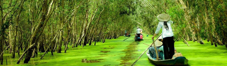 Rừng tràm Trà Sư trải rộng trên diện tích 845ha với hệ sinh thái rừng ngập nước đặc trưng phía Tây sông Hậu cùng nhiều loài động thực vật đa dạng quý hiếm.