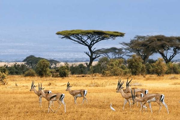 mùa hè Chobe