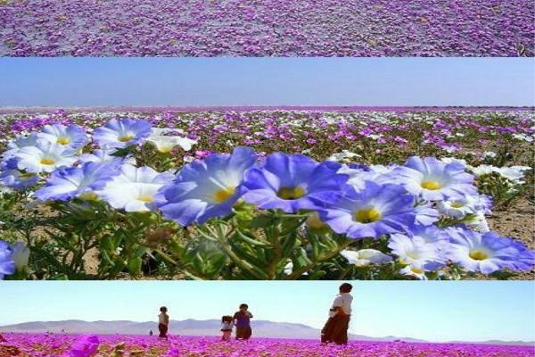 Sa mạc Atacama